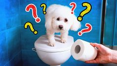 TOILET PAPER CHALLENGE -AMAZING TOILET PAPER HACKS