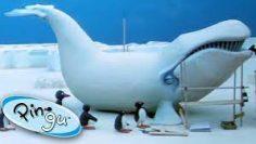 کارتون-پنگوئن2-1
